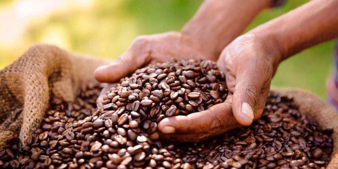 Kahve severlere kötü haber, bilim insanları açıkladı