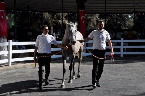 Bursa'da safkan Arap tayları 3 milyon liraya satıldı