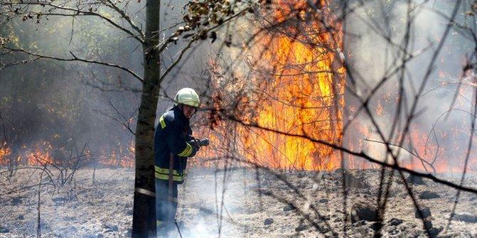 Düzce'de orman yangını