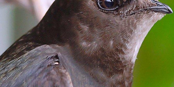 Bir mucize daha gerçekleşiyor, körlüğün ilacı bir kuşun gözyaşında