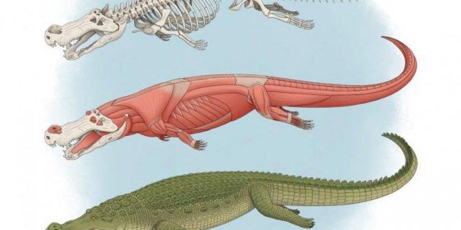 Dişleri muz büyüklüğünde: Dinazor yiyen canlı bulundu