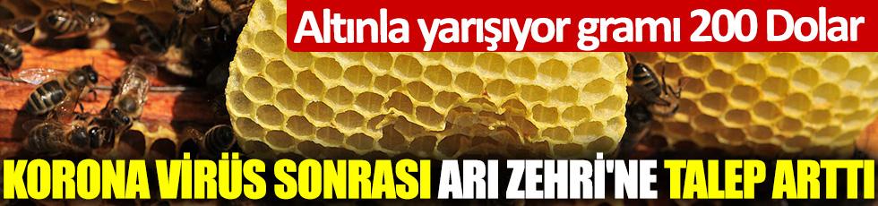 Korona virüs sonrası Arı Zehri'ne talep arttı! Altınla yarışıyor Gramı 200 Dolar