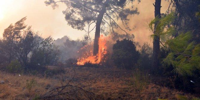 Antalya Adrasan'da orman yangını! Çevre illerden destek geliyor