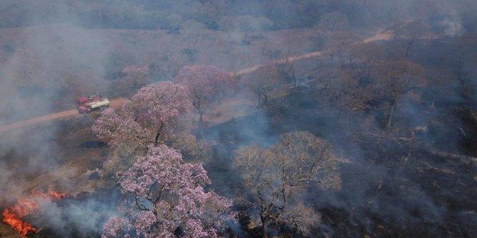 Ülke alarmda bir yılda 15 bin yangın: Nesli tükenmekte olan hayvanlar yanıyor
