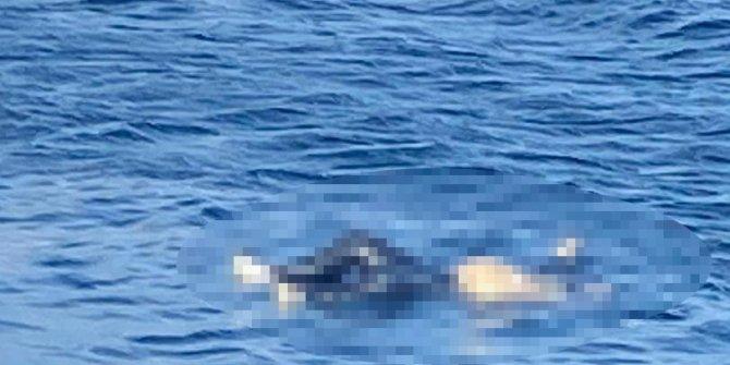 Avşa Adası açıklarında erkek cesedi bulundu
