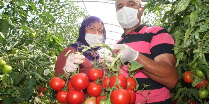 Tarlada 40 kuruş, markette 4 lira!Çiftçinin domates tepkisi