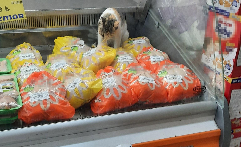 Markette büyük skandal: Tavuk reyonunda dalmadığı tavuk kalmadı