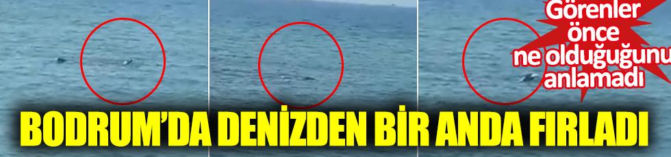 Bodrum'da denizden bir anda fırladı: Görenler önce ne olduğunu anlamadı