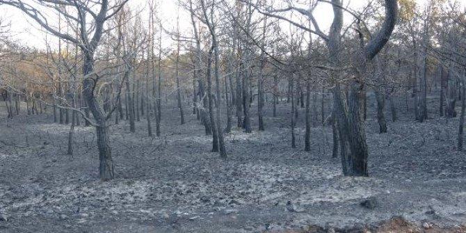 Ayvalık'da denize karşı ormanlık alan bu hale geldi. Tam bir otellik yer yandı
