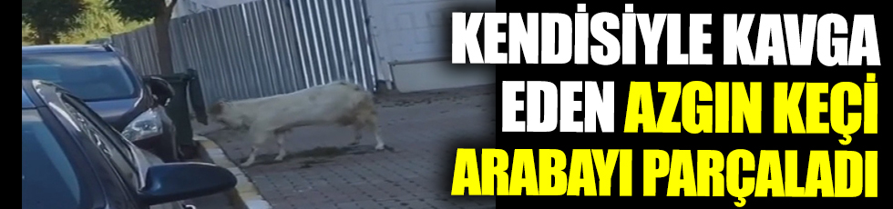 Kendisiyle kavga eden azgın keçi arabayı parçaladı