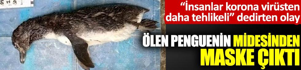 """""""İnsanlar korona virüsten daha tehlikeli"""" dedirten olay: Ölen penguenin midesinden maske çıktı"""