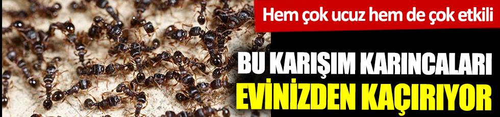 Bu karışım karıncaları evinizden kaçırıyor! Hem çok ucuz hem de çok etkili