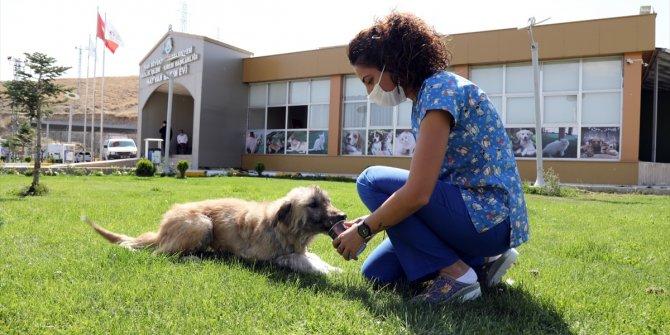 Ölmek üzereyken bulunan köpek tedavi edildi