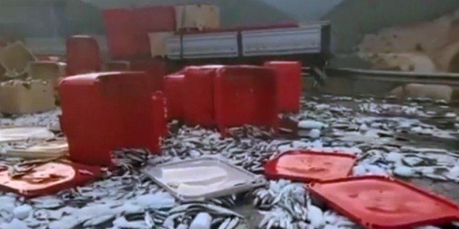 Karayolu balıkla kaplandı!