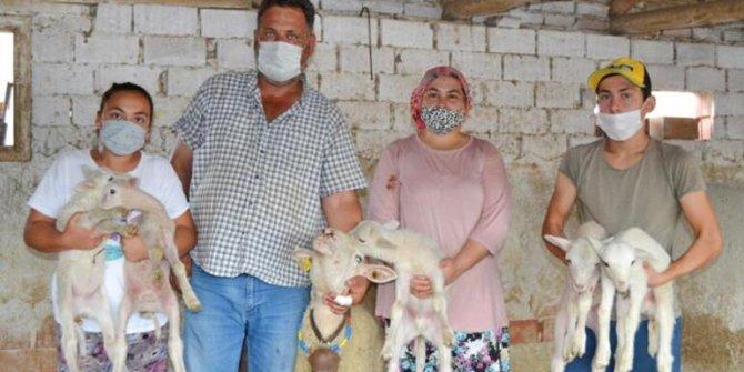 Manisa'lı çiftçi duyurdu! Ailenin yeni üyeleri maske, mesafe ve hijyen