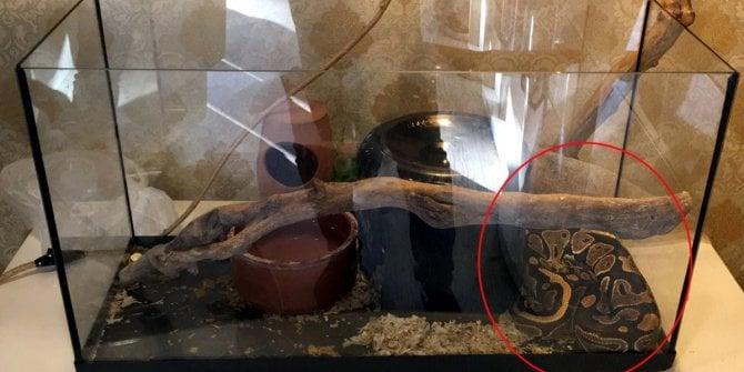 Antalya'da tefeci vahşeti! Piton yılanıyla işkence yapmışlar