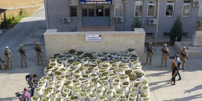 Diyarbakır'da PKK'ya ağır darbe! 236 bin 500 kök kenevir ele geçirildi