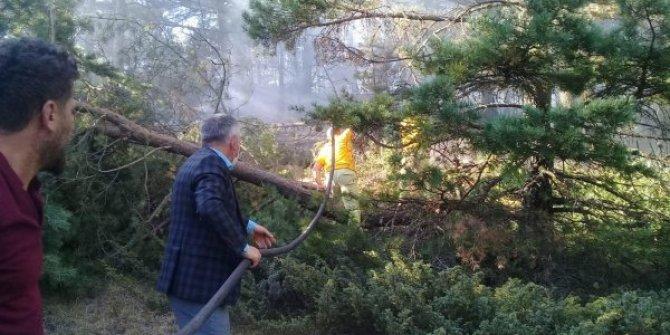 Ordu Mesudiye'de ormanlık alanda yangın