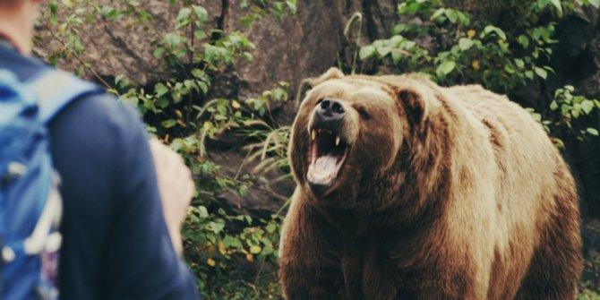 Yüzlerce turistin önünde ayı saldırısına uğrayan kişi hayatını kaybetti