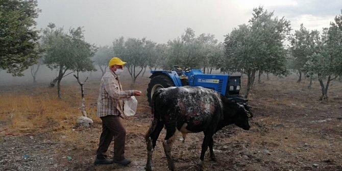 Manisa'da yangın çıkan çiftlikte hayvanlar yanma tehlikesi geçirdi