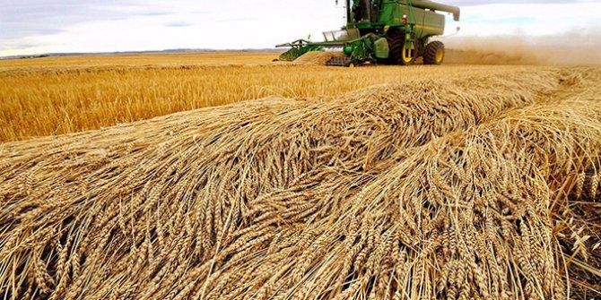 Buğday ithalatında gümrük vergisi sıfırlandı