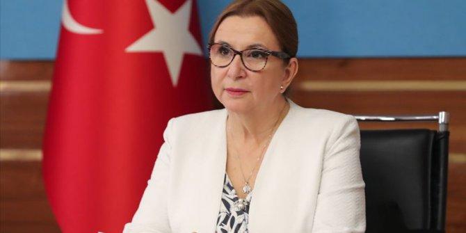 Bakan Pekcan: Serbest Ticaret Anlaşması olumlu ilerliyor