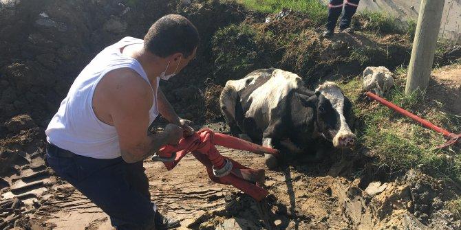 Bataklığa saplanan inek yoğun çaba sonucu kurtarılabildi