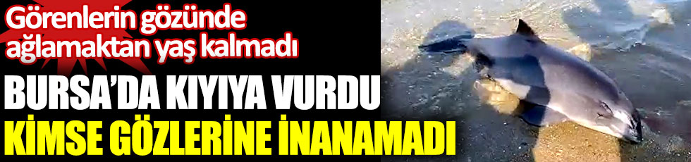 Bursa'da kıyıya vurdu görenler gözlerine inanamadı. Görenlerin gözünde ağlamaktan yaş kalmadı. Elleriniz kırılsın kahrolsun kötü insanlar