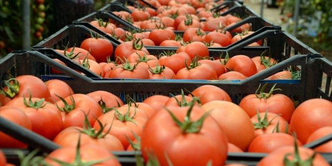 Yasak kalktı. Irak'a domates ihracatı yeniden başladı
