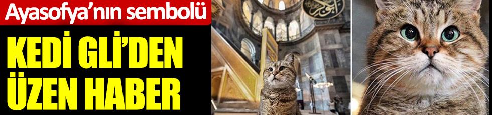 Ayasofya'nın  sembolü kedi Gli'den üzen haber
