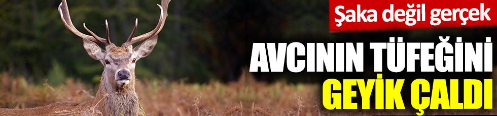Çekya'da avcının tüfeğini geyik çaldı. Şaka değil gerçek