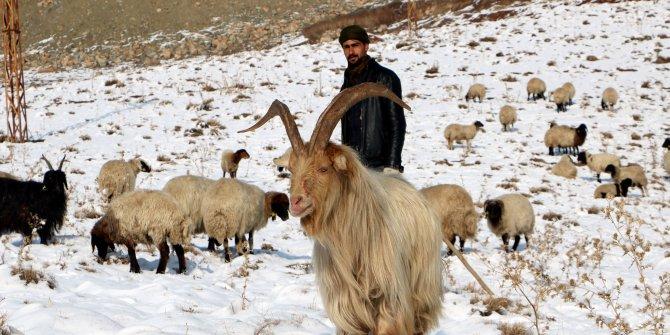 Hakkari'de besicilere erken kar sürprizi