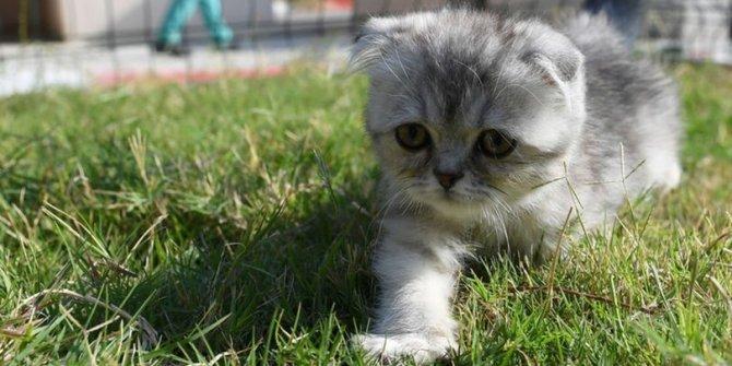 Danimarka'da onlarca kedi itlaf edildi