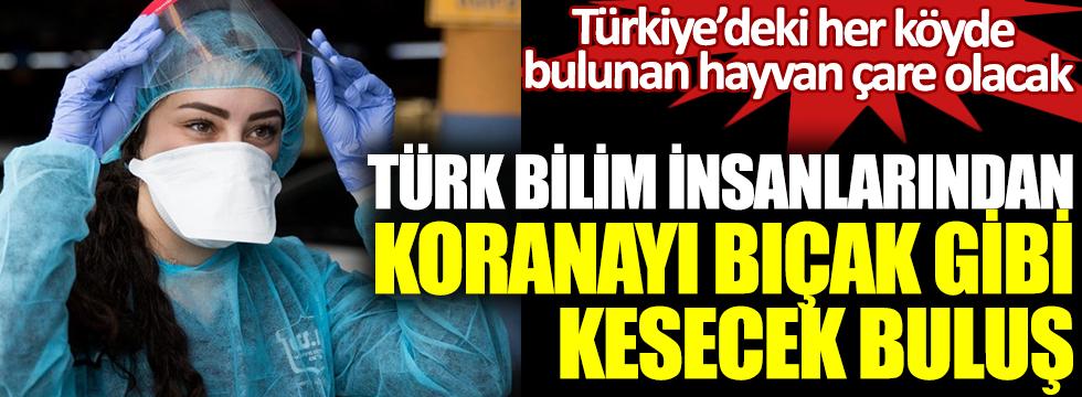 Türk bilim insanlarından koronayı bıçak gibi kesecek buluş. Türkiye'deki her köyde bulunan hayvan çare olacak
