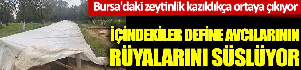 İçindekiler define avcılarının rüyasını süslüyor. Bursa'daki zeytinlik kazıldıkça ortaya çıkıyor