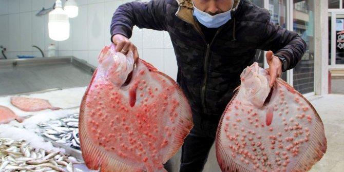 Karadeniz'in en pahalısı: Kilosu 200 lira