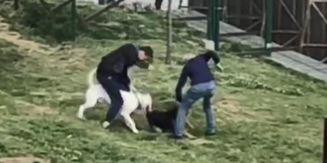Küçükçekmece'de pitbull dehşeti