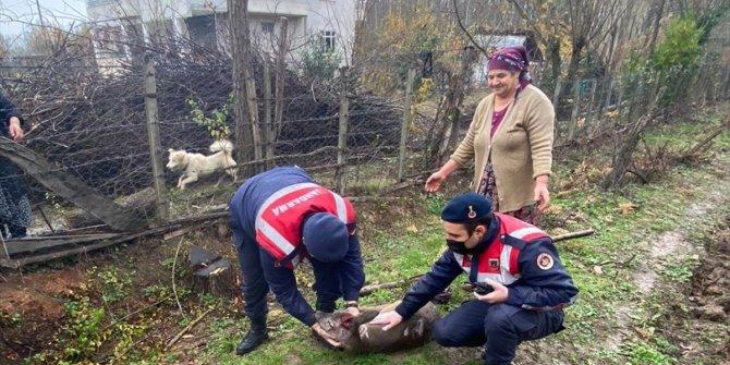Sokak köpeği yaraladı jandarma sahip çıktı