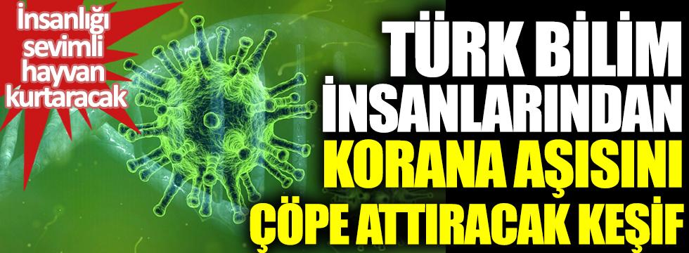 Türk bilim insanlarından korona aşısını çöpe attıracak keşif. İnsanlığı sevimli hayvan kurtaracak