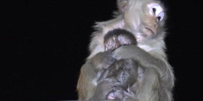 Maymunlar caddeleri işgal etti