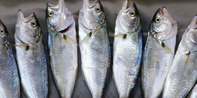 Ocak ayının en lezzetli balıkları nelerdir?