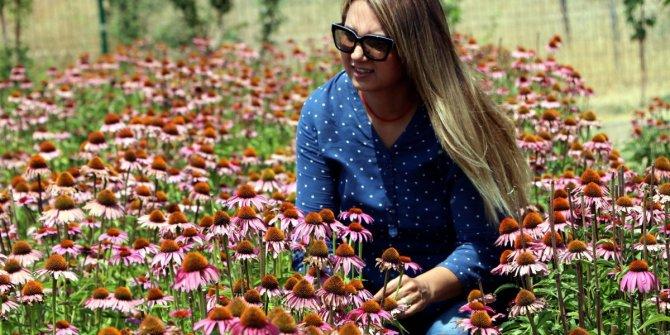 Tıbbi ve aromatik bitkilerin ihracat değeri 300 milyon dolar