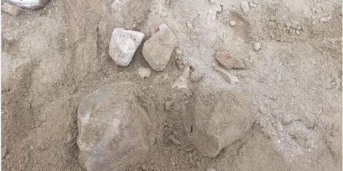 Amasya'da file ait fosil bulundu