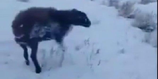 Öldüren soğuklar geldi -51 derecede hepsi dondu. Isınmak isteyen fare köpeğin boynunda dondu
