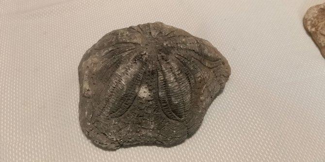 Çanakkale'de 6 deniz yıldızı fosili ele geçirildi. 4 gözaltı var
