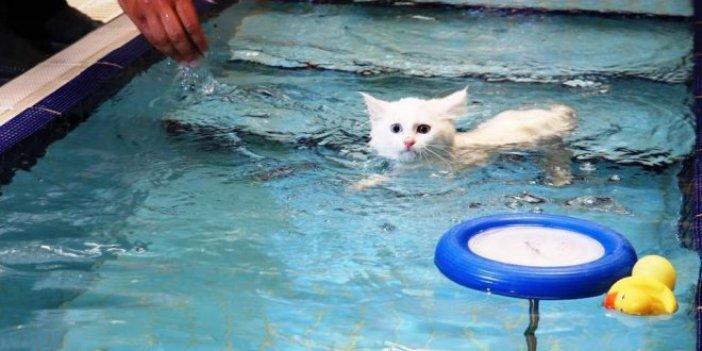 Van kedilerinin havuz keyfi İngiliz basınında