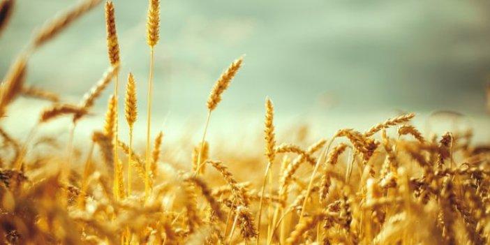 Dünyada buğday stoku eriyor