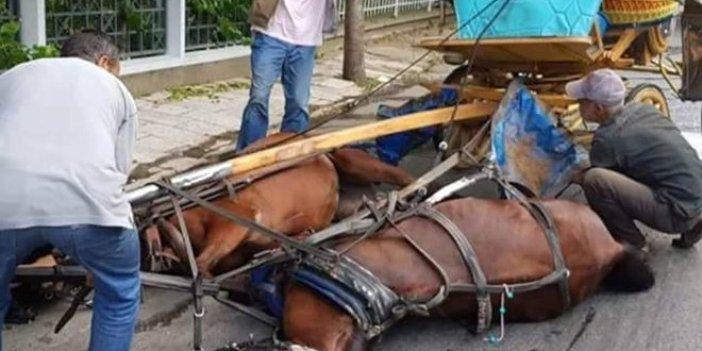 Adalar'da atların dramı sürüyor