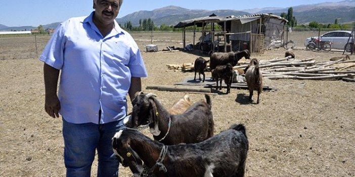 Futbol kulübü keçiye yatırım yaptı