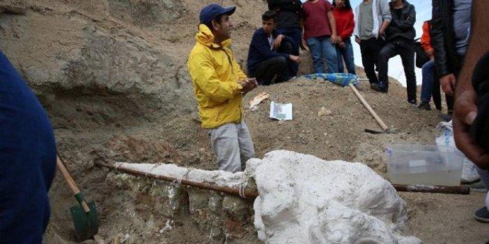 7,4 milyon yıllık hayvan fosili bulundu